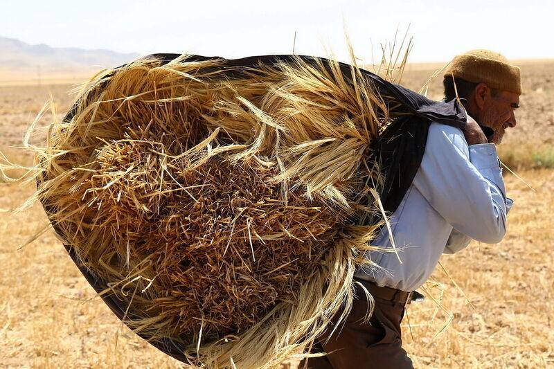 کشاورز کارت یعنی رسمی کردن گرانی کود و نهاده فراوری، به جای این کار قیمت ها را کاهش دهید